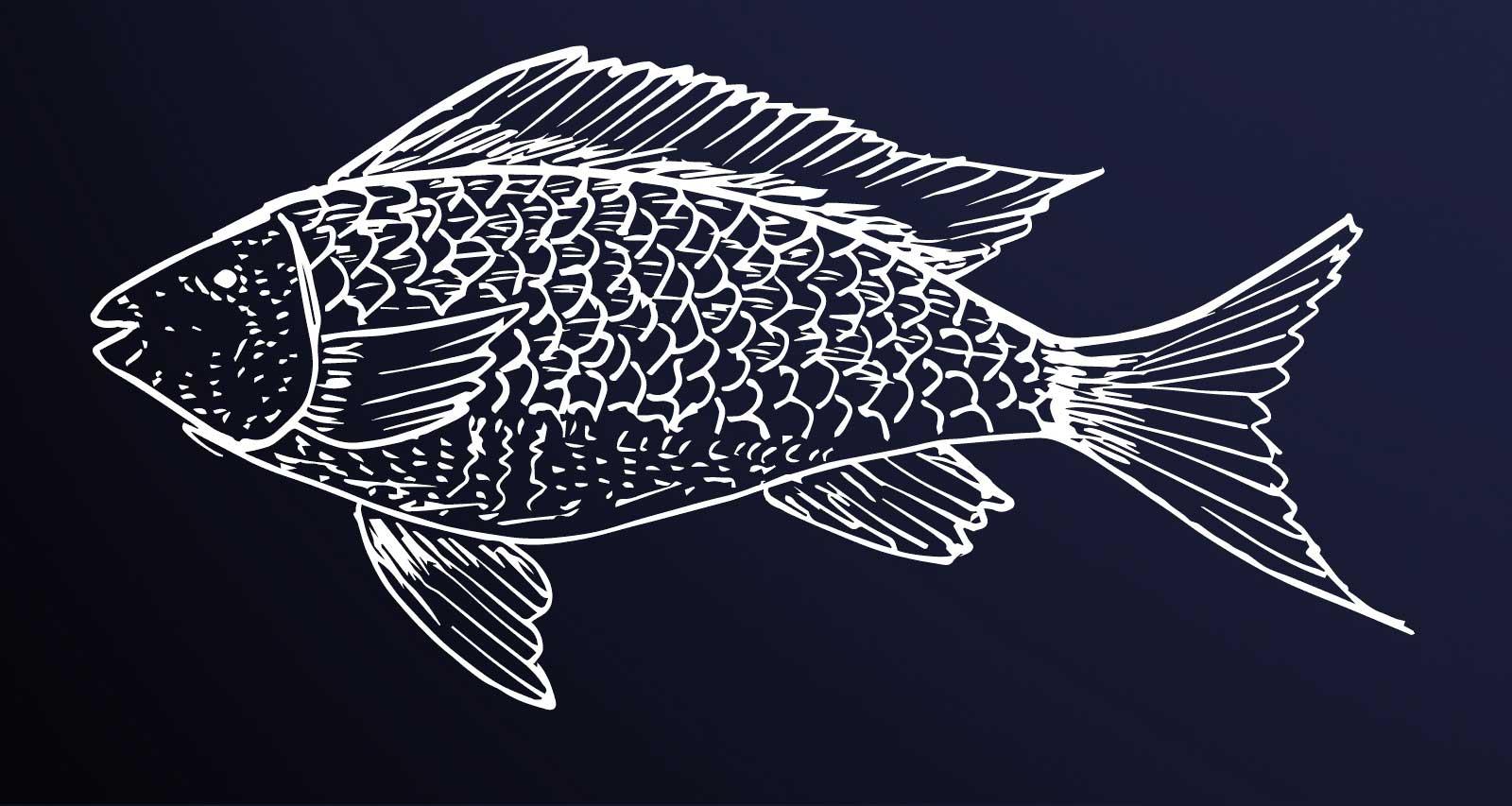 pesce disegno
